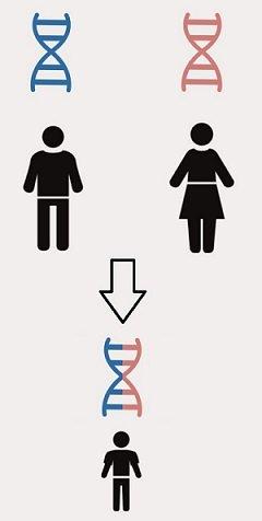 Eredita DNA