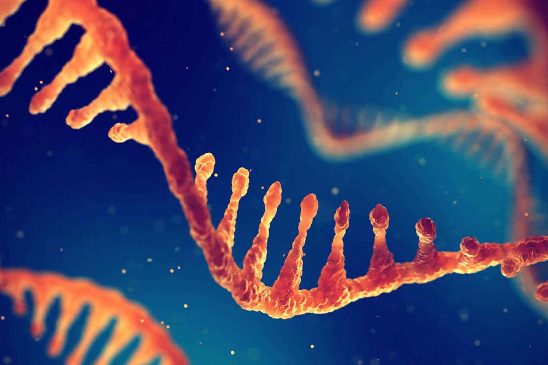 Definizione di mRNA