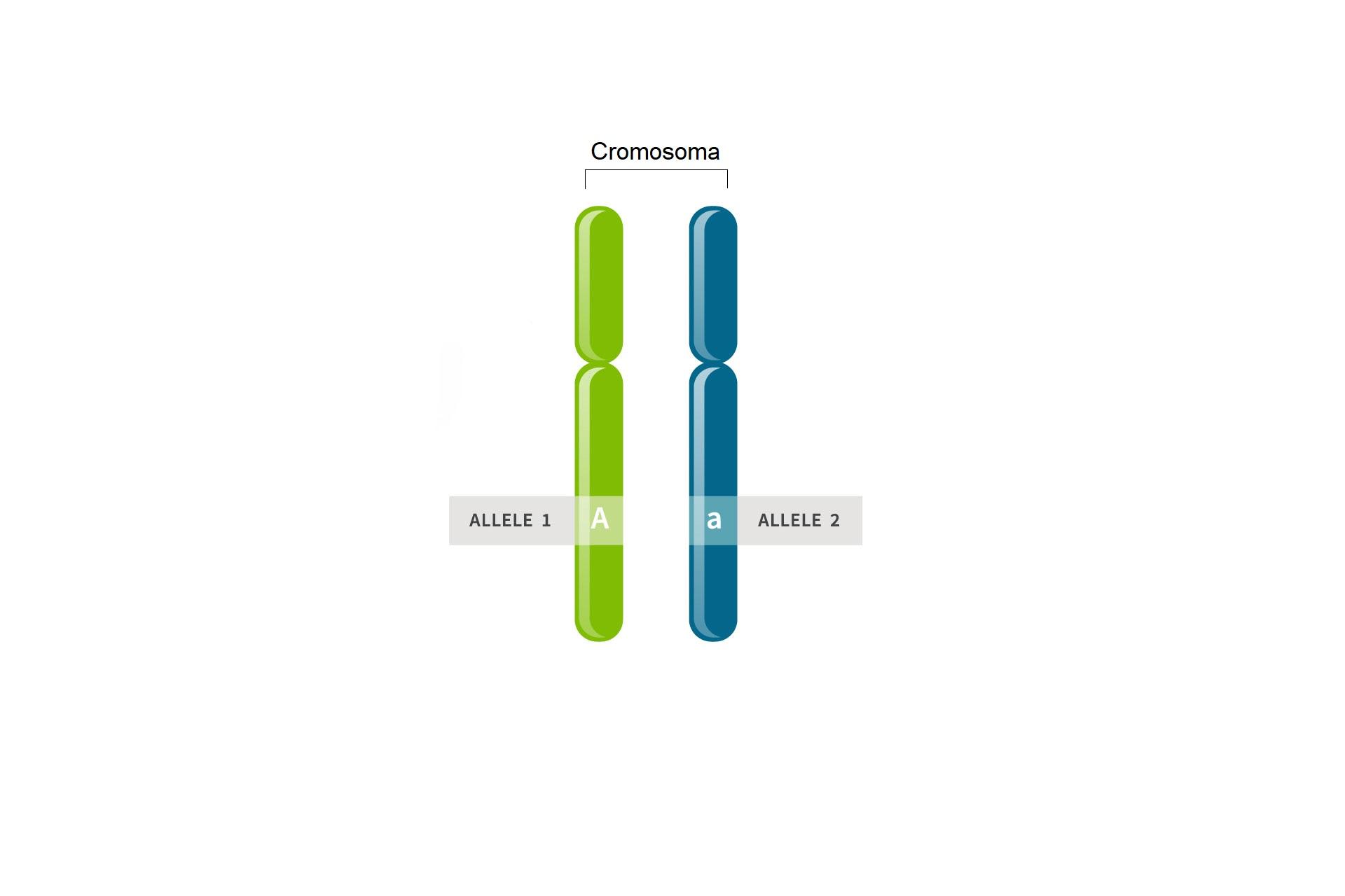 definizione di allele