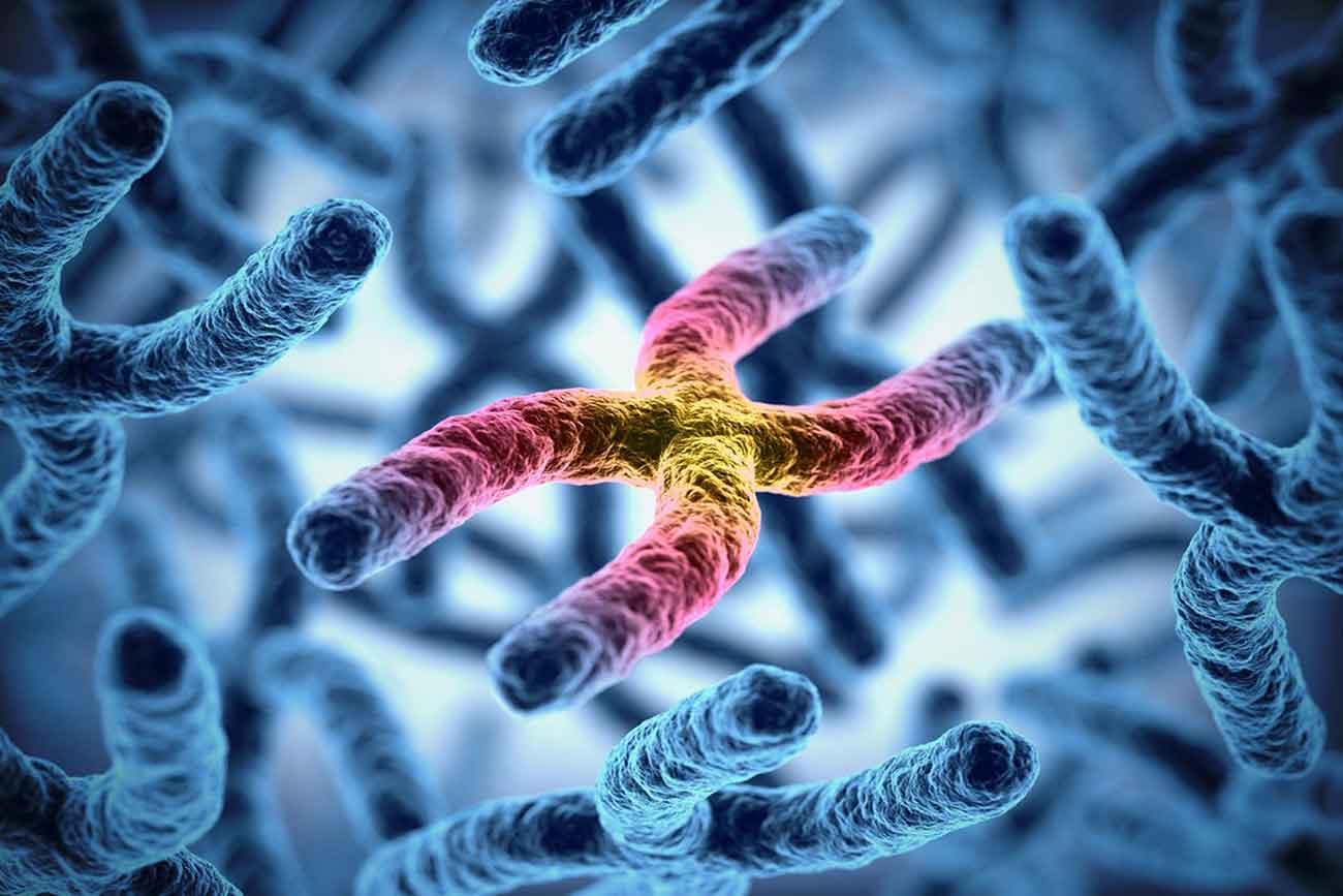 Definizione di Cromosoma