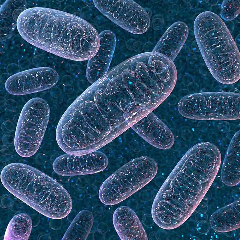 Definizione di DNA mitocondriale