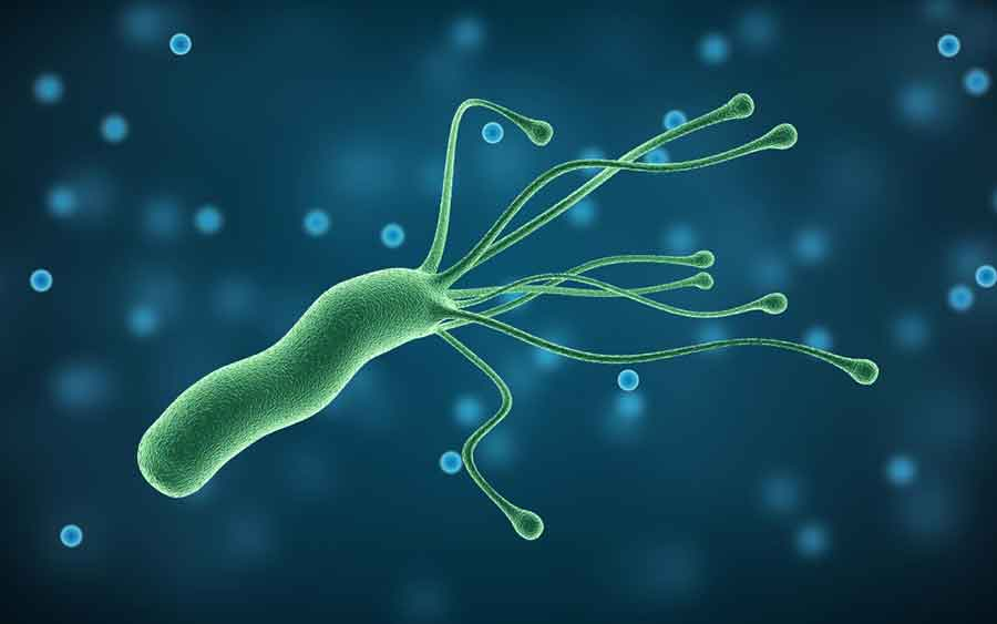 Definizione di Helicobacter pylori