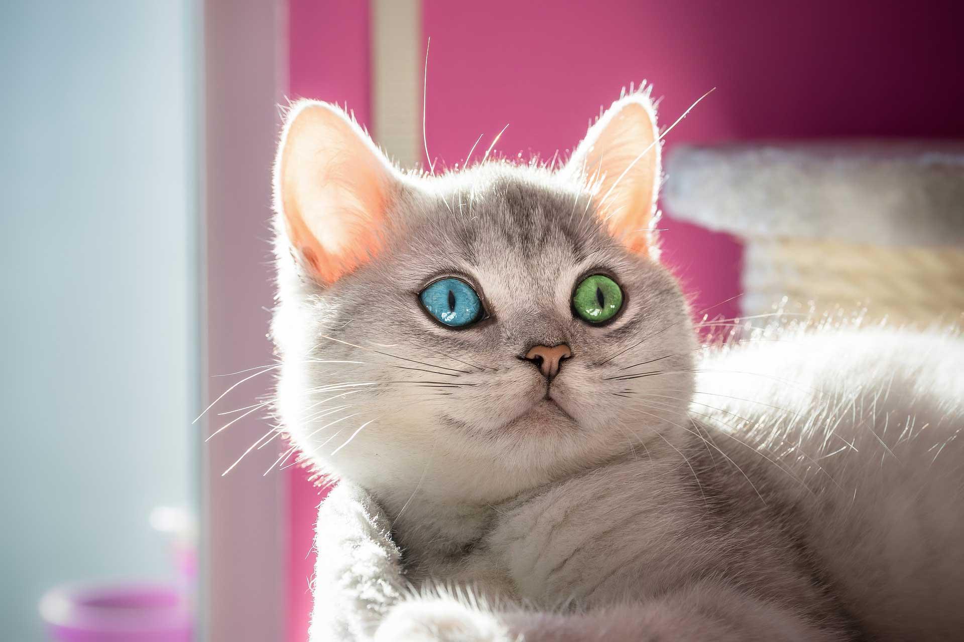 colore degli occhi da cosa dipende