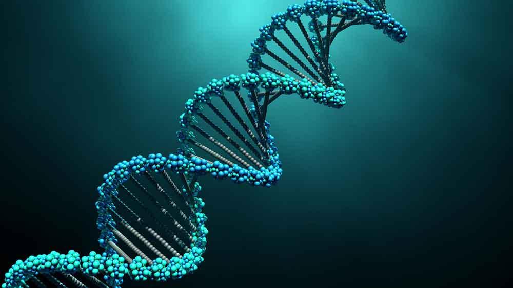 Definizione di Duplicazione cromosomica