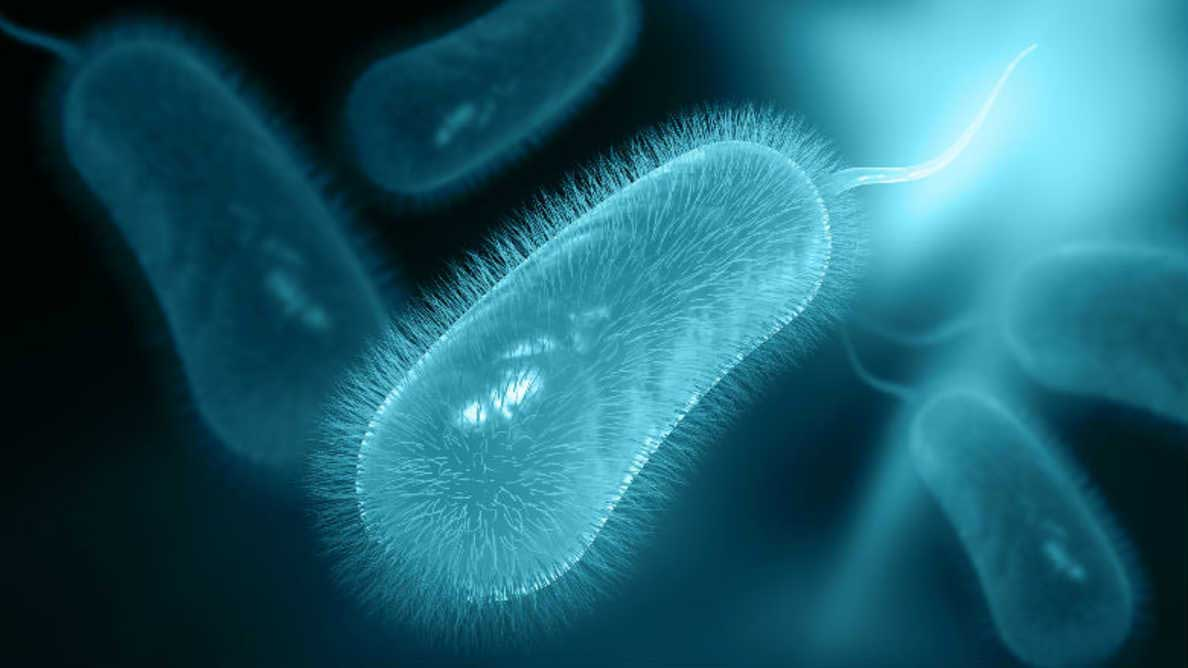 helicobacter pylori cura naturale